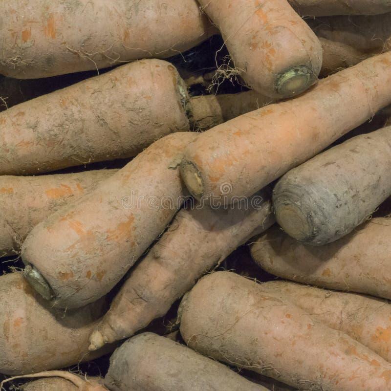 Υψηλή άποψη γωνίας των σκονισμένων καρότων στοκ εικόνα με δικαίωμα ελεύθερης χρήσης