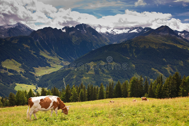 υψηλή βοσκή βουνών λιβαδ&i στοκ φωτογραφία
