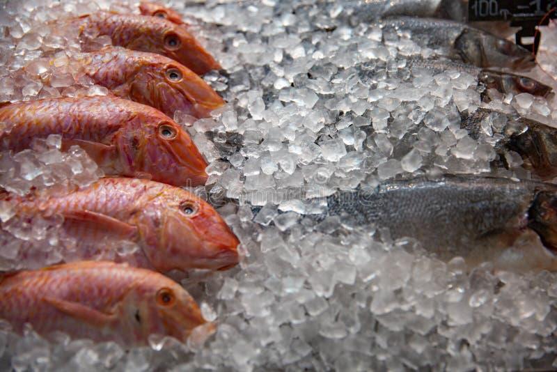 Υψηλή ζωή γωνίας ακόμα της ποικιλίας των ακατέργαστων φρέσκων ψαριών που καταψύχουν στο κρεβάτι του κρύου πάγου στο στάβλο αγοράς στοκ εικόνα με δικαίωμα ελεύθερης χρήσης