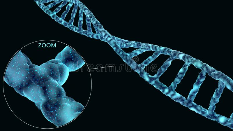 Υψηλό λεπτομερές σπειροειδές μόριο DNA που απομονώνεται στο Μαύρο στοκ φωτογραφία με δικαίωμα ελεύθερης χρήσης