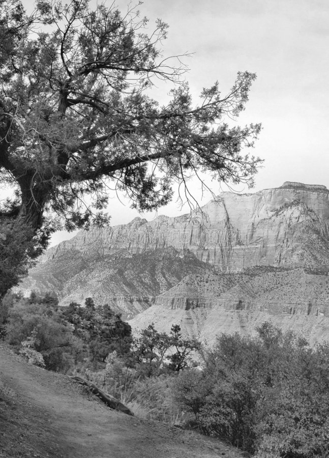 υψηλό τοπίο ερήμων zion στοκ φωτογραφίες