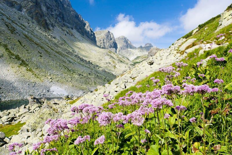 Download Υψηλό Tatras, Σλοβακία στοκ εικόνες. εικόνα από φύση - 22781326