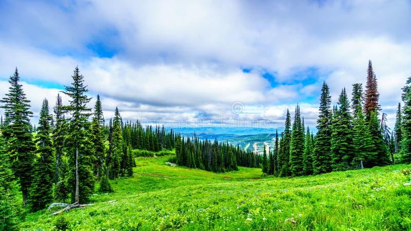 Υψηλά αλπικά δάσος και λιβάδια και δάση στοκ φωτογραφίες με δικαίωμα ελεύθερης χρήσης