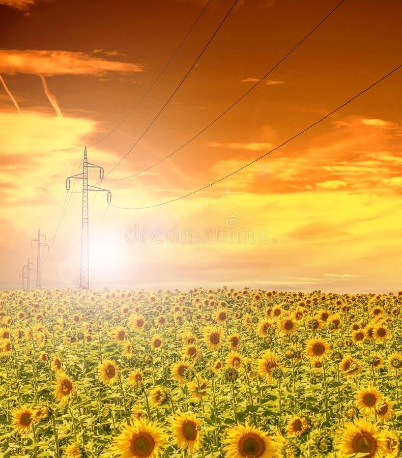 Υψηλής τάσεως ιστοί ηλεκτροφόρων καλωδίων στον τομέα των ηλίανθων, ουρανός ηλιοβασιλέματος στοκ εικόνες