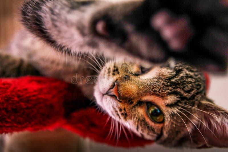 Υψηλή γάτα πέντε στοκ φωτογραφία