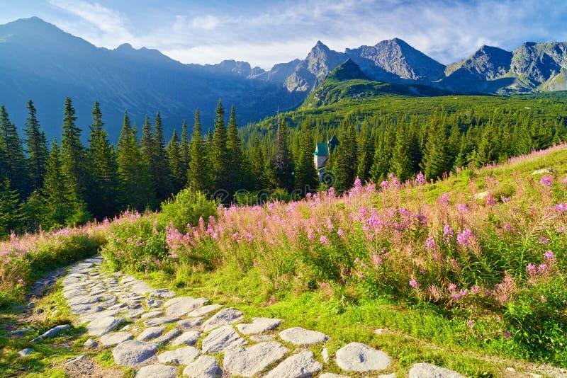 Υψηλή φύση Carpathians Πολωνία τοπίων ιχνών βουνών Tatra στοκ φωτογραφία με δικαίωμα ελεύθερης χρήσης