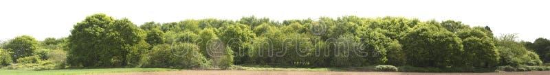 Υψηλός καθορισμός Treeline που απομονώνεται σε ένα άσπρο υπόβαθρο στοκ φωτογραφίες