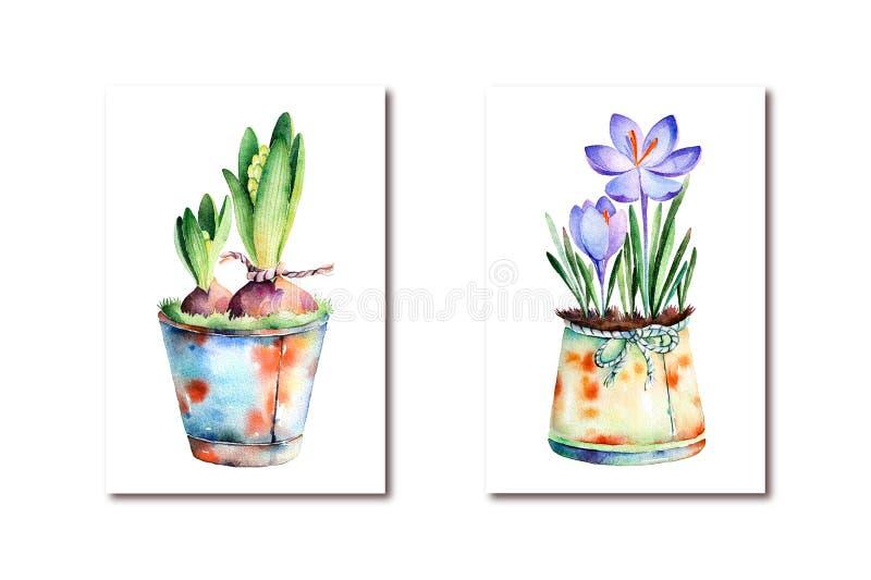2 υψηλός - χρωματισμένοι ποιότητα watercolor- κρόκος και υάκινθος ελεύθερη απεικόνιση δικαιώματος
