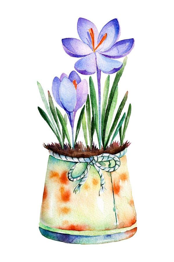 Υψηλός - χρωματισμένος ποιότητα watercolor- κρόκος 2 στο shabby παλαιό δοχείο διανυσματική απεικόνιση
