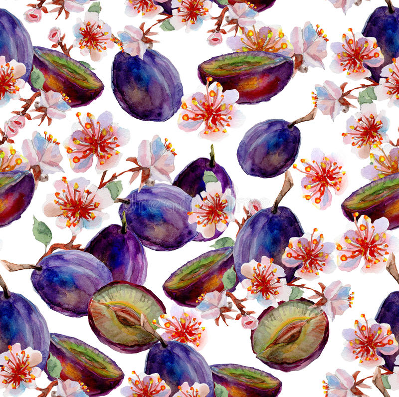 υψηλό watercolor ποιοτικής ανίχνευσης ζωγραφικής διορθώσεων πλίθας photoshop πολύ Δαμάσκηνα και λουλούδια απεικόνιση αποθεμάτων