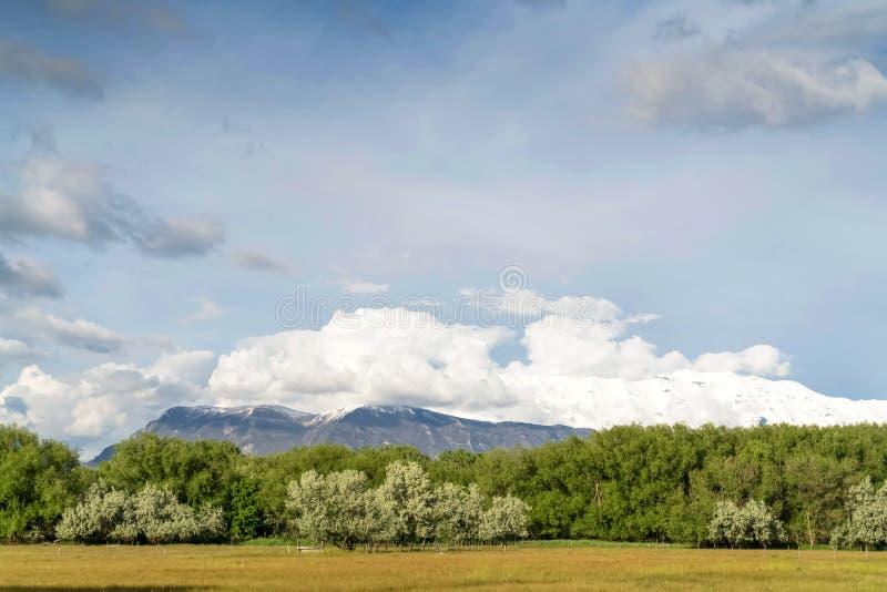 Υψωμένος πολύβλαστα δέντρα βουνών και επεκτατικός χλοώδης τομέας κάτω από το νεφελώδη μπλε ουρανό στοκ εικόνα με δικαίωμα ελεύθερης χρήσης