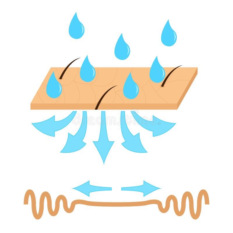 Υδάτωση και ρυτίδα δερμάτων απεικόνιση αποθεμάτων