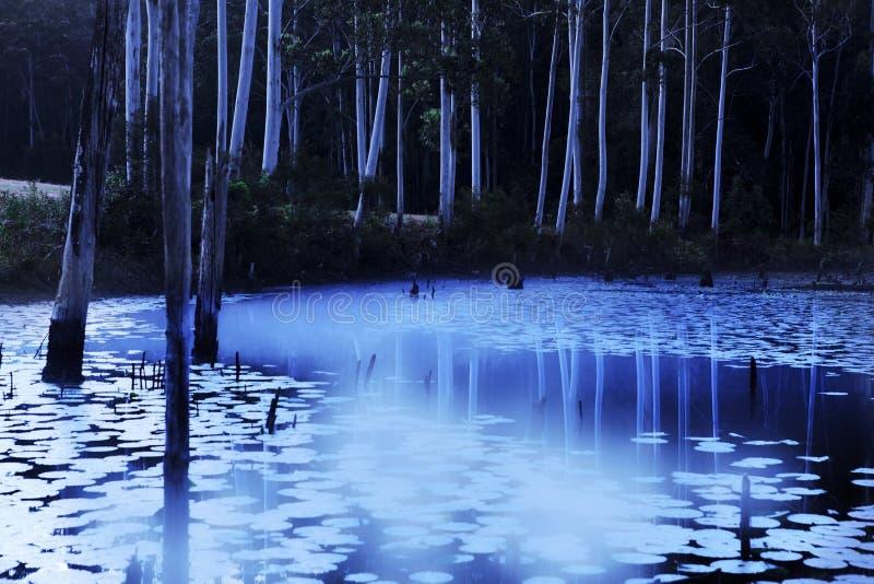 Υδρονέφωση βραδιού στη λίμνη στοκ φωτογραφίες με δικαίωμα ελεύθερης χρήσης