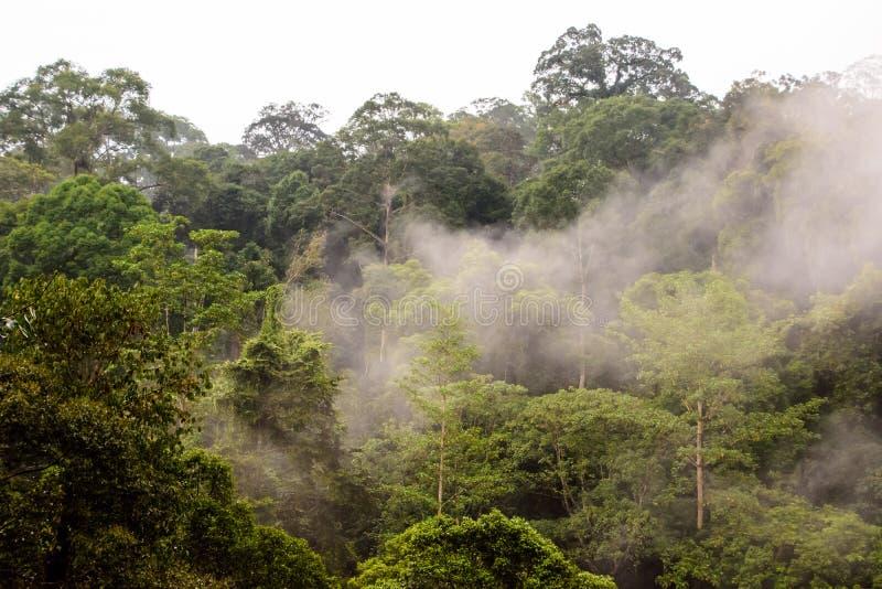 Υδρονέφωση ξημερωμάτων πέρα από το τροπικό δάσος στοκ φωτογραφία