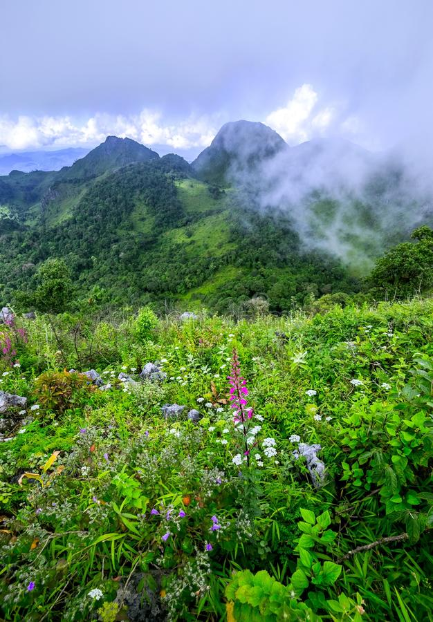 Υδρονέφωση πρωινού στο τροπικό τροπικό δάσος στοκ εικόνα