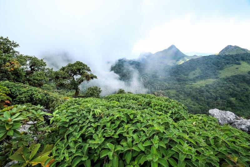 Υδρονέφωση πρωινού στο τροπικό τροπικό δάσος στοκ εικόνα με δικαίωμα ελεύθερης χρήσης