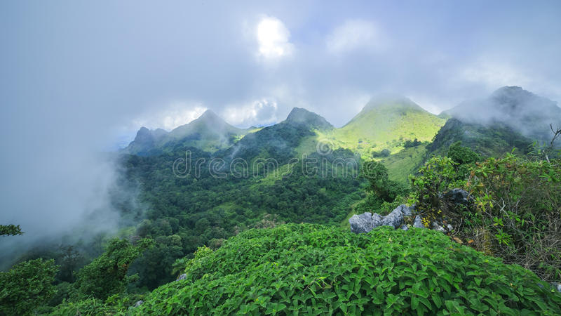 Υδρονέφωση πρωινού στο τροπικό τροπικό δάσος στοκ φωτογραφίες