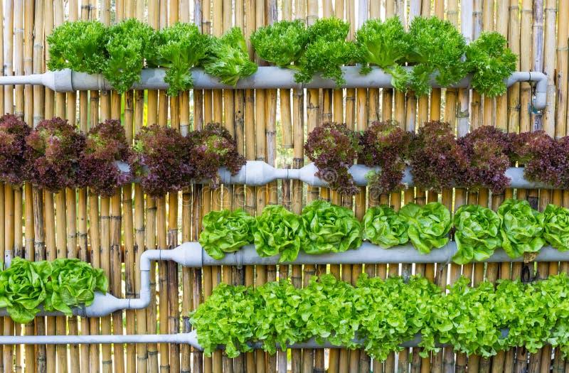 Υδροπονική κάθετη κηπουρική στοκ εικόνα