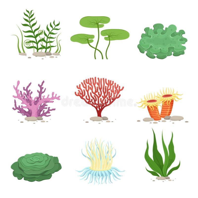 Υδρόβια υποβρύχια εγκαταστάσεις και κοράλλια πανίδας θάλασσας Διανυσματικό ζωηρόχρωμο ωκεάνιο στοιχείο απεικόνιση αποθεμάτων