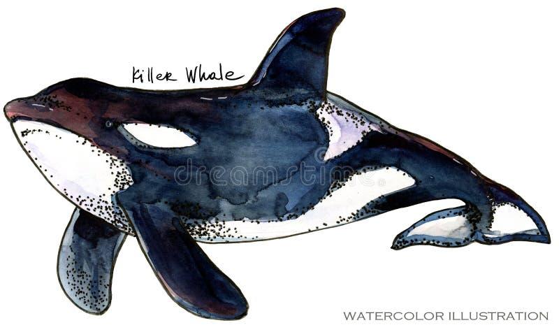 Φάλαινα δολοφόνων υποβρύχια απεικόνιση watercolor ζωής η ζωική όμορφη θαμπάδα ανασκόπησης χρωματίζει τη octpous θάλασσα χταποδιών απεικόνιση αποθεμάτων