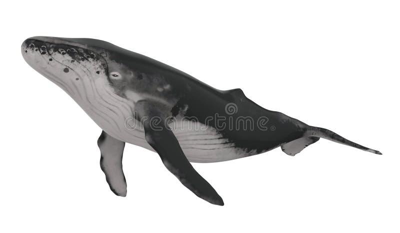 Φάλαινα που απομονώνεται ελεύθερη απεικόνιση δικαιώματος