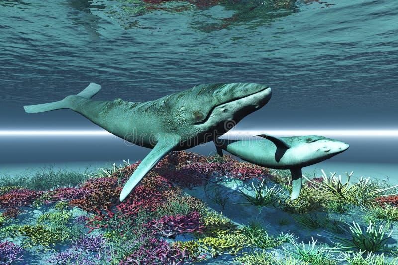 φάλαινα τραγουδιού διανυσματική απεικόνιση