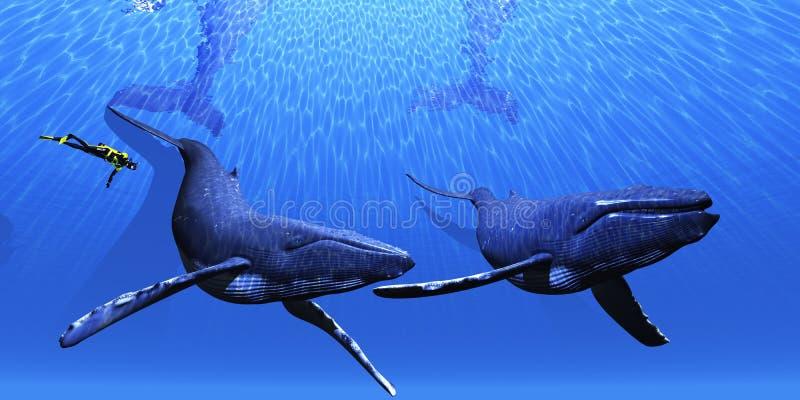 φάλαινα 01 ελεύθερη απεικόνιση δικαιώματος