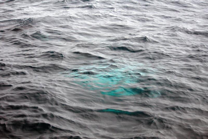 Φάλαινα Humpback στον Ισημερινό στοκ εικόνες