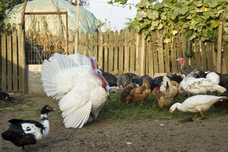 Φάρμα πουλερικών στοκ φωτογραφία