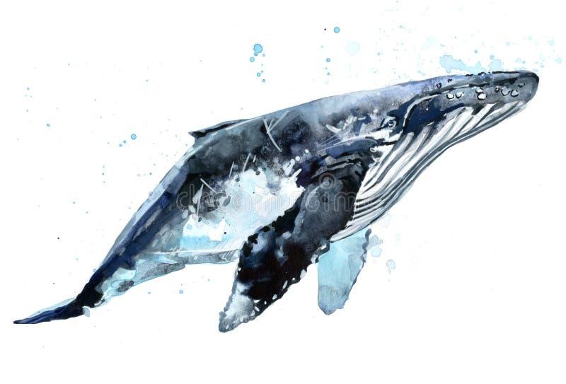 Φάλαινα Απεικόνιση watercolor φαλαινών Humpback ελεύθερη απεικόνιση δικαιώματος