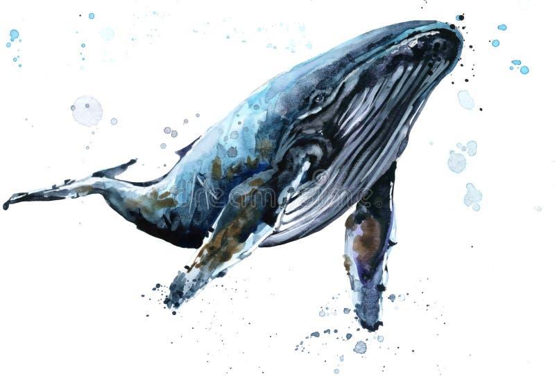 Φάλαινα Απεικόνιση watercolor φαλαινών Humpback διανυσματική απεικόνιση