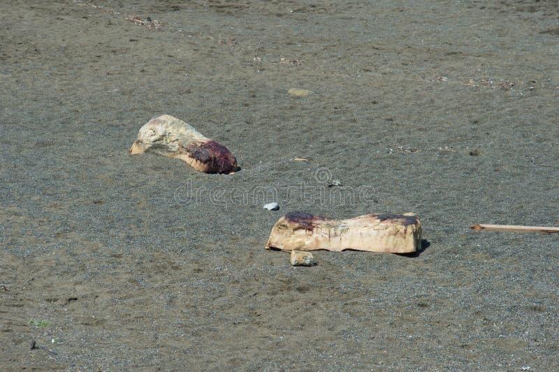Φάλαινα σπέρματος Beached στοκ εικόνες