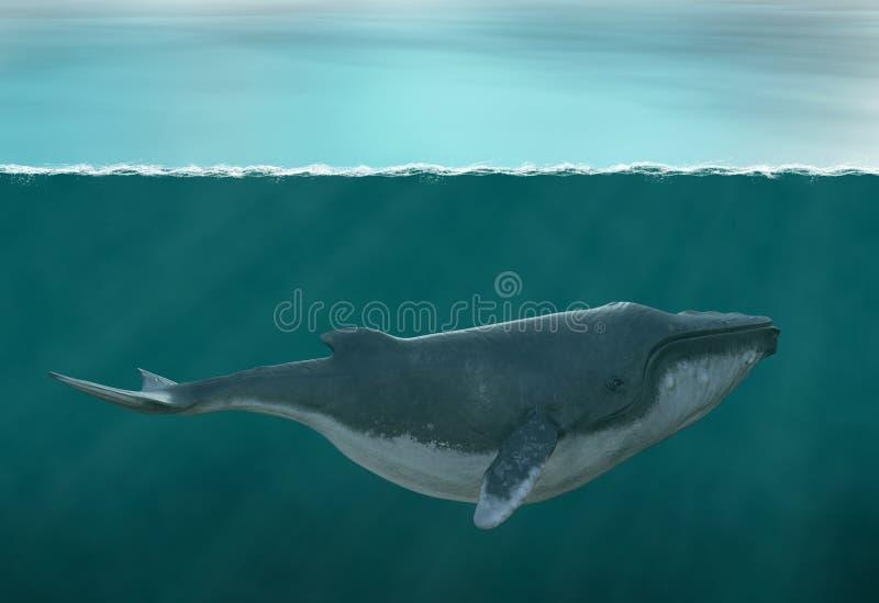 Φάλαινα Humpback, θαλάσσια ζωή, ωκεανός διανυσματική απεικόνιση