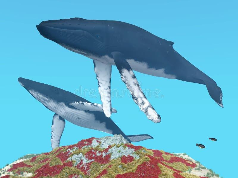 Φάλαινες Humpback ελεύθερη απεικόνιση δικαιώματος