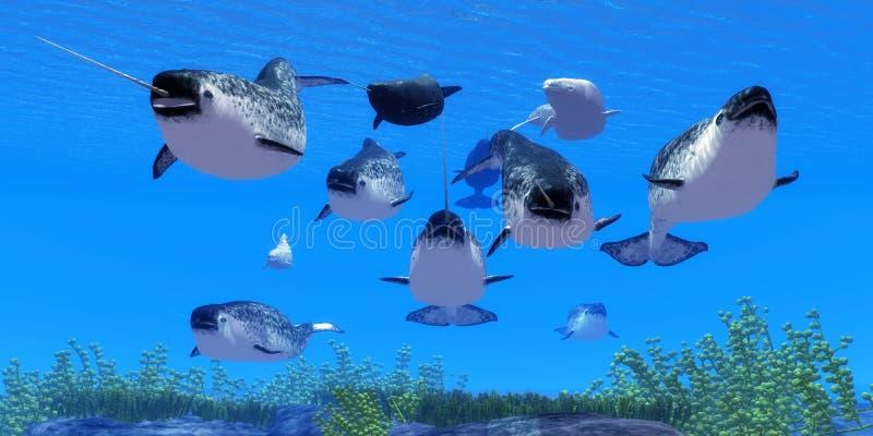 Φάλαινες Narwhal διανυσματική απεικόνιση