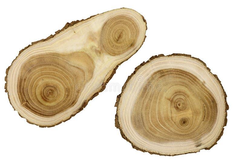 Φέτα της ξύλινης ακακίας στοκ φωτογραφίες με δικαίωμα ελεύθερης χρήσης