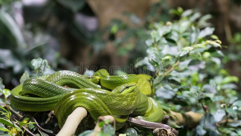 Φίδια που δεν είναι σε ένα αεροπλάνο στοκ εικόνα με δικαίωμα ελεύθερης χρήσης