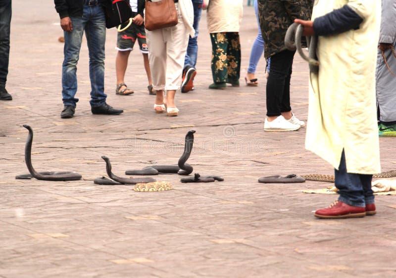 Φίδια στην επιφυλακή στοκ εικόνες