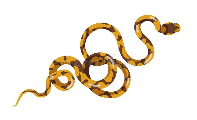 Φίδι ή φίδι που απομονώνεται στο άσπρο υπόβαθρο Boa ή python Εξωτική σαρκοφάγος έρπουσα, αρπακτική, άγρια έρημος ή ελεύθερη απεικόνιση δικαιώματος