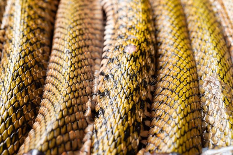 Φίδι διακοπής που παρατάσσεται στοκ φωτογραφίες