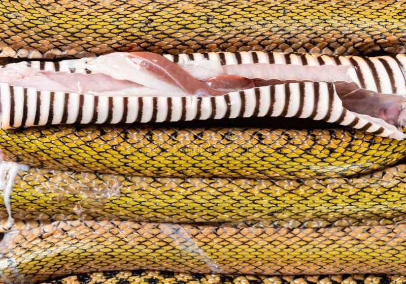 Φίδι διακοπής που παρατάσσεται στοκ εικόνα με δικαίωμα ελεύθερης χρήσης
