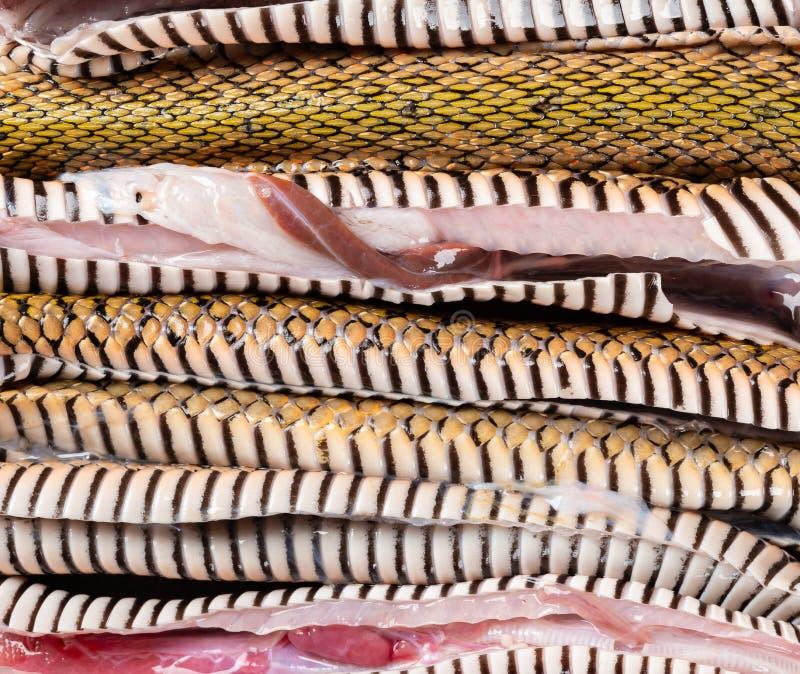 Φίδι διακοπής που παρατάσσεται στοκ εικόνες με δικαίωμα ελεύθερης χρήσης