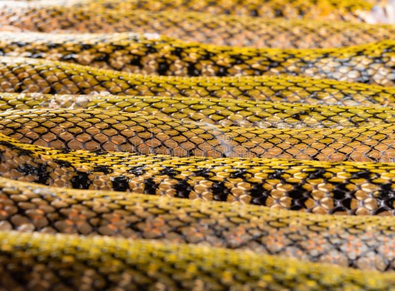 Φίδι διακοπής που παρατάσσεται στοκ εικόνα