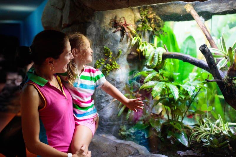 Φίδι οικογενειακής προσοχής στο terrarium ζωολογικών κήπων στοκ εικόνες