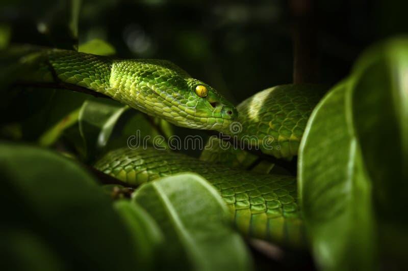Φίδι οχιών στοκ εικόνες