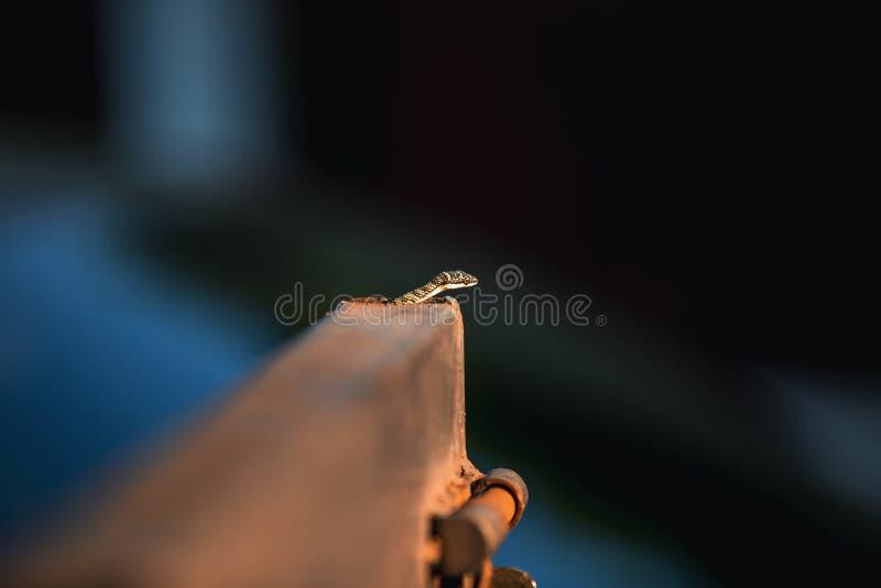 Φίδι που γλιστρά την εσωτερική πόρτα μετάλλων στο σπίτι στοκ εικόνες