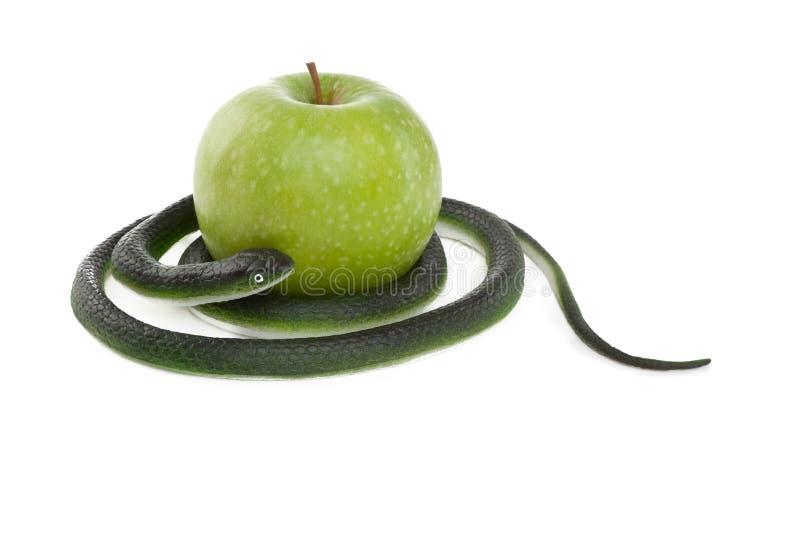 Φίδι που κουλουριάζει γύρω από ένα πράσινο μήλο στοκ φωτογραφία με δικαίωμα ελεύθερης χρήσης