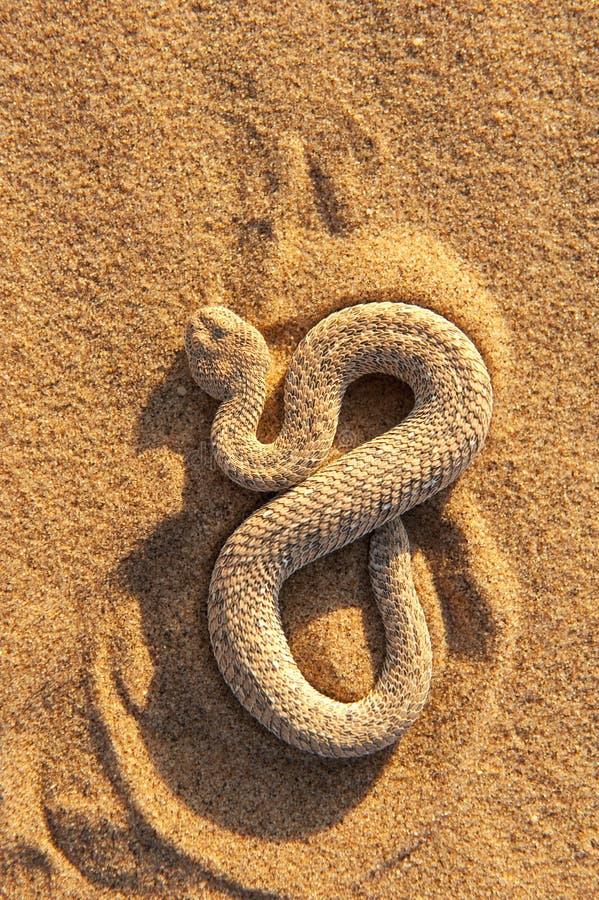 φίδι 2 στοκ φωτογραφία με δικαίωμα ελεύθερης χρήσης