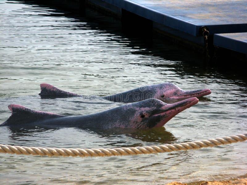 φίλοι δελφινιών στοκ εικόνες