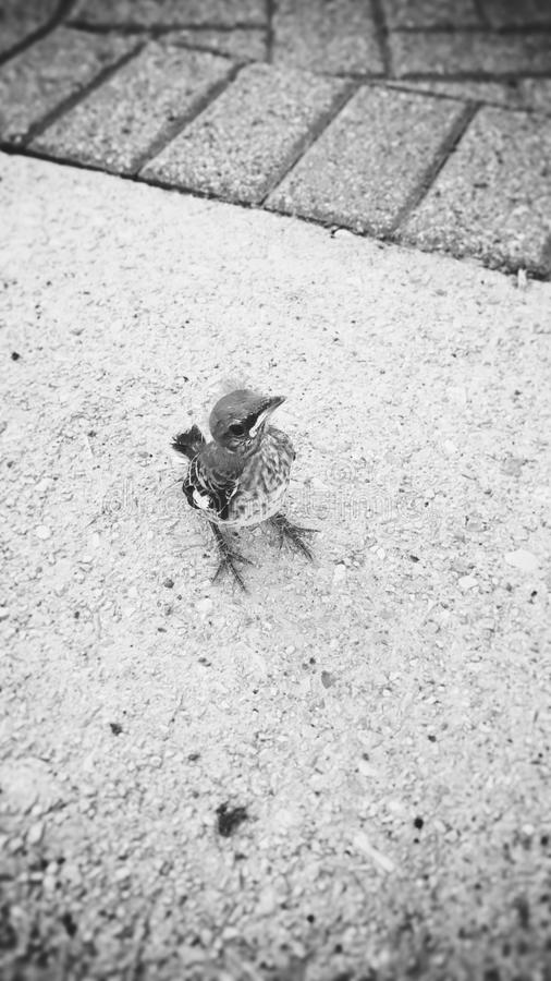 Φίλος πουλιών στοκ εικόνα με δικαίωμα ελεύθερης χρήσης